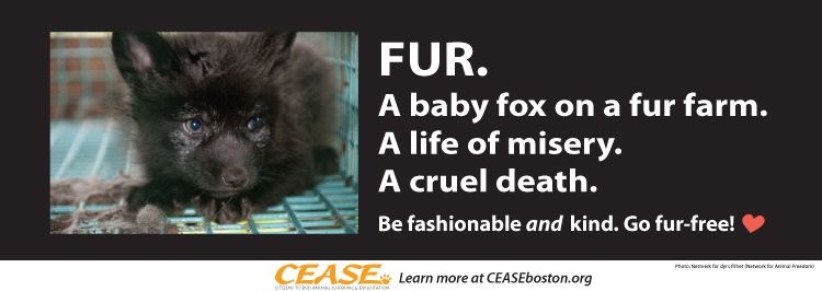 Fur. A baby fox on a fur farm. A life of misery. A cruel death. Be fashionable and kind. Go fur-free!