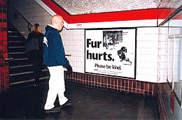 Man in a subway station looks at an ad that says Fur hurts and shows animals in traps.