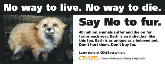 No way to live. No way to die. 40 million animals suffer and die on fur farms each year. Each is an individual like this fox. Each is as unique as a beloved pet. Don't hurt them. Don't buy fur.