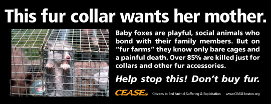 This fur collar wants her mother. Baby foxes are playful, social animals who bond with their family members. But on